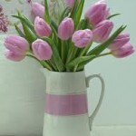 Special Offer! Tulips from Holland